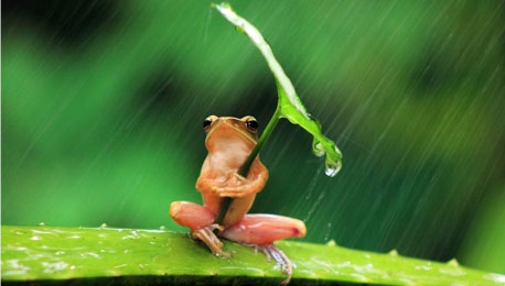 The Cool Frog and Photography Cruelty