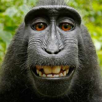 Selfie is, selfie does -- monkey. | David Slater