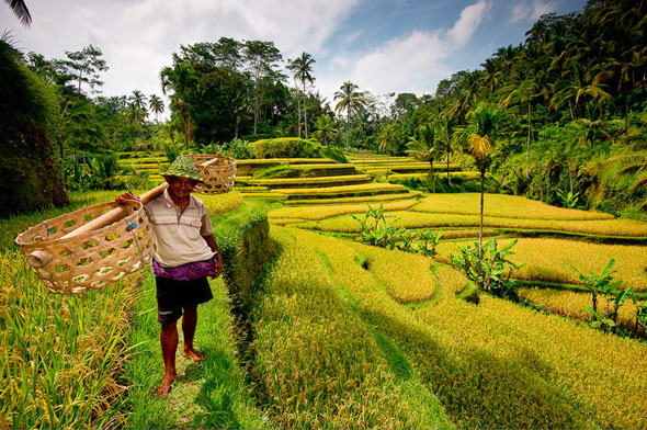 Not to forget the rice terraces of Bali... | Stefan Forster