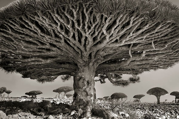 Beth Moon -- Portraits of Time
