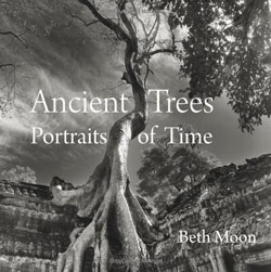 Ancient Trees -- Portraits of Time by Beth Moon, available on Amazon