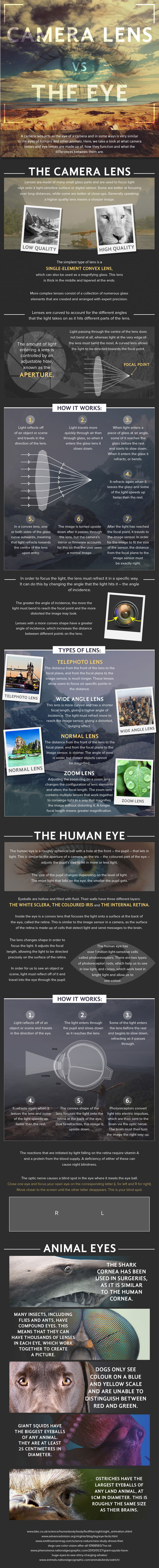 "What type of ""lens"" is the human eye? 
