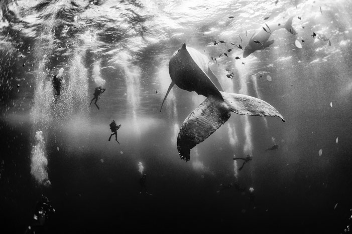 Diving with a humpback whale and her new born calf while they cruise around Roca Partida Island, in Revillagigedo, Mexico. | Anuar Patjane, winner of National Geographic Traveler Photo Contest 2015
