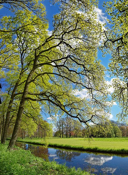 Dutch Spring | Karel van Wolferen