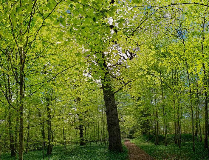 Irish Spring | Karel van Wolferen