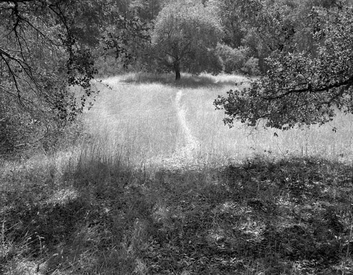 In Jack London's Garden | Karel van Wolferen