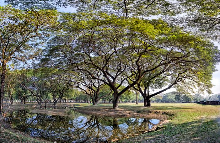 Sukhotai Trees | Karel van Wolferen